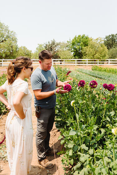 Floral Designer Kati from Santa Barbara Company and Farmer Mark Donofrio look at purple Dahlia flowers on The Starter Farm in Santa Ynez California