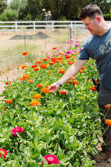 Farmer Mark Donofrio of The Starter Farm in Santa Ynez California stands in the zinnia flower section of the farm
