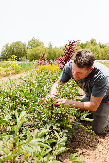 Farmer Mark Donofrio of The Starter Farm in Santa Ynez California kneels in the flower section of the farm to check on the plants