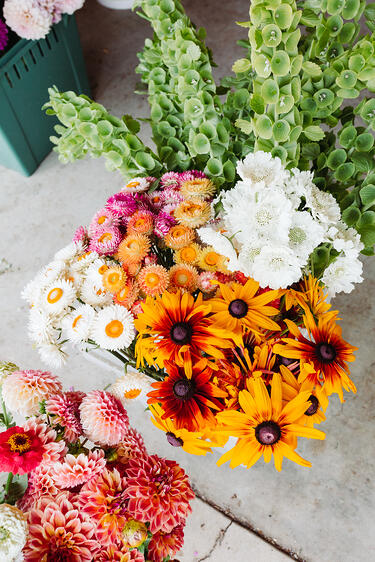 Buckets of colorful flowers on The Starter Farm in Santa Ynez California. Flowers are white, pink, and orange strawflowers, green bells of ireland, yellow black-eyes susans, and pink and orange dahlias